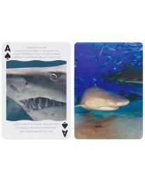 Bicycle Sharks Cards